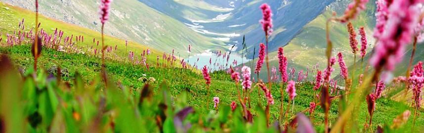 Sankri-Sankri (Valley of Flower)